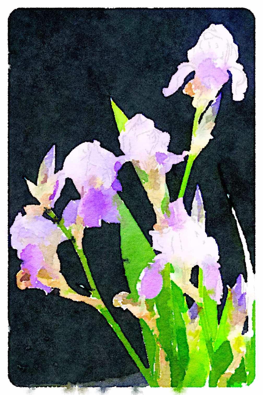 Photo of irises, processed with Waterlogue iPad app.
