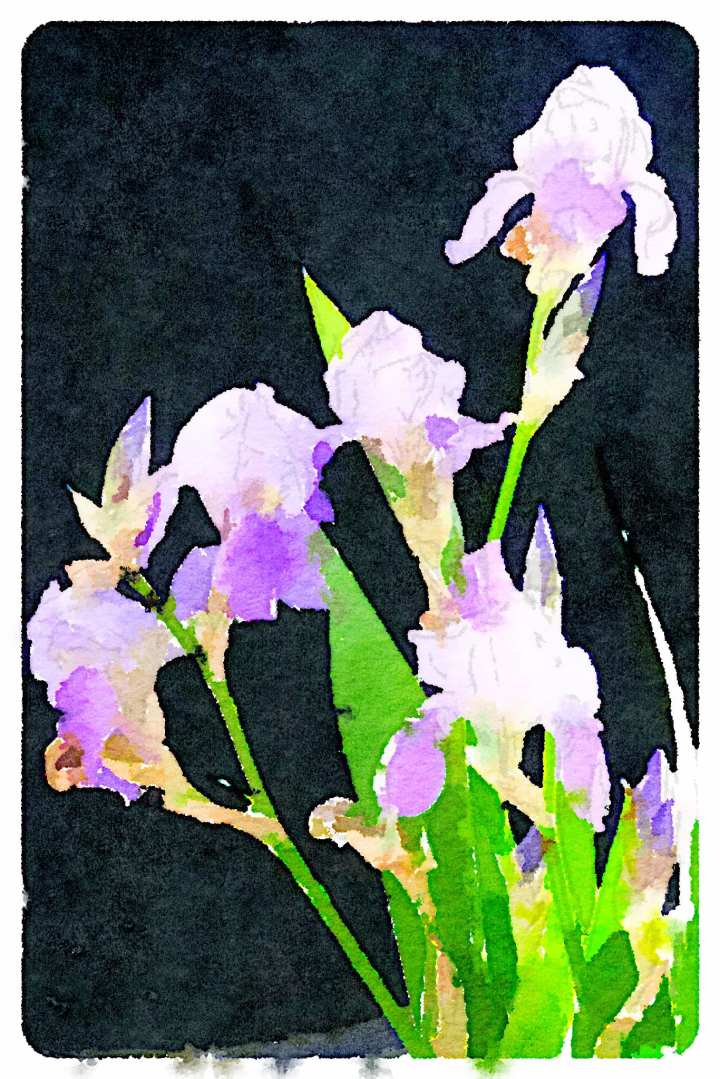 Photo of irises, processed with Waterlogue iPad app.