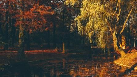 Toamna în București - Parcul Carol I, 14 Nov 2016
