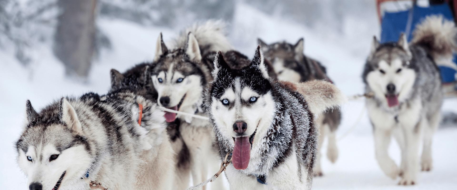 WinterXperience Noorwegen (22 t/m 28 februari 2020)
