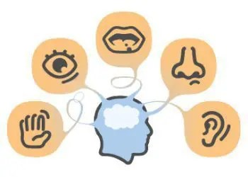 blog illustration of the human mind and the five senses