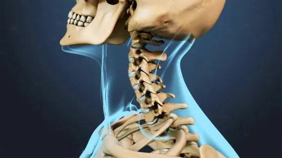 blog de imágenes de anatómica rango de movimiento de la columna cervical