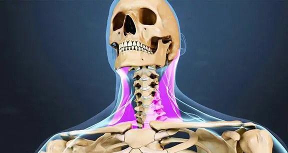 immagine di blog di fronte scheletro e muscoli e tendini intorno al collo