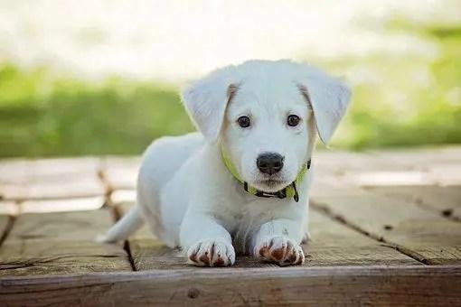 blog de imágenes del perrito que se establecen