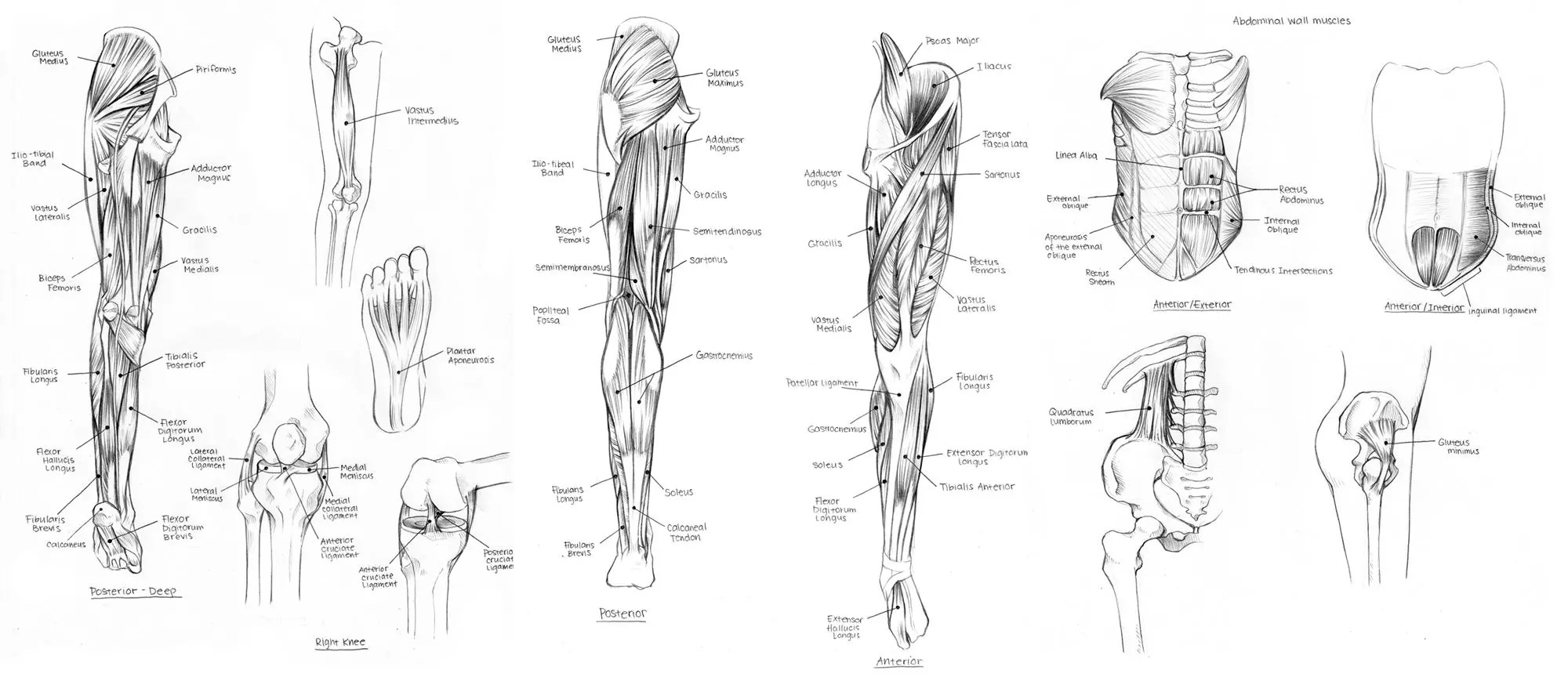 Diagram Of Nerves In Upper Leg