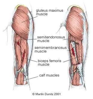 anatomia del contrabbasso