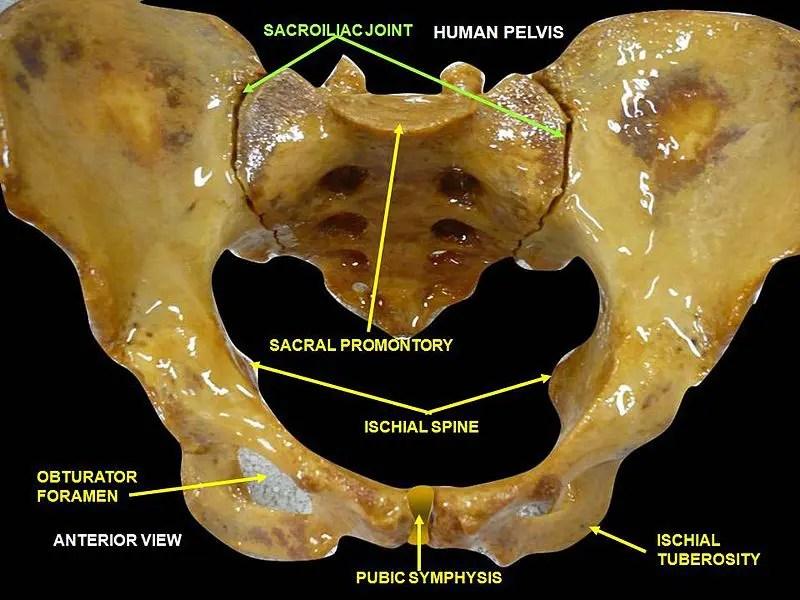 disfunción de la articulación sacroilíaca el paso tx.