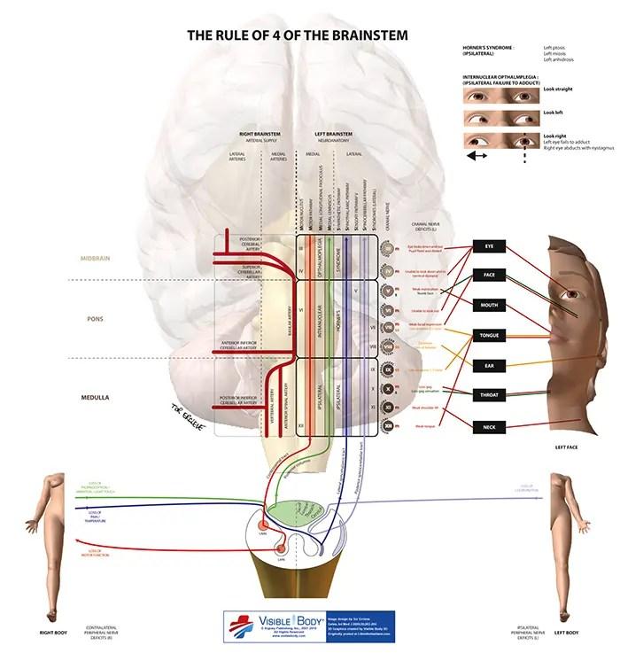 tronco cerebral el paso tx.