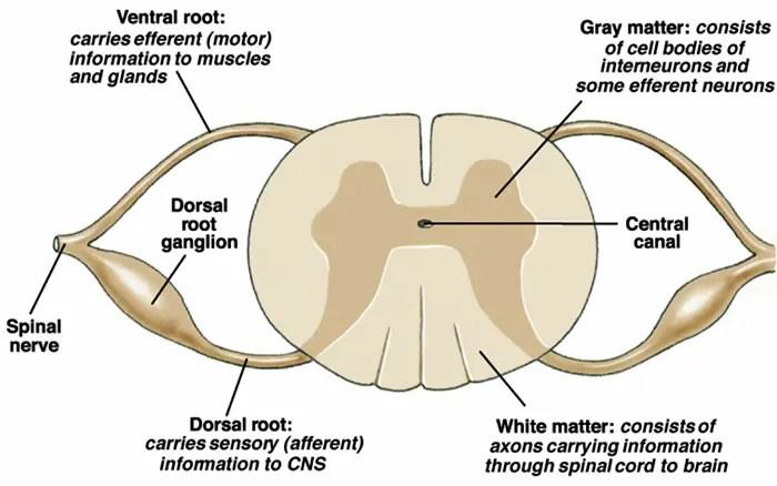 neurophysiology el paso tx.