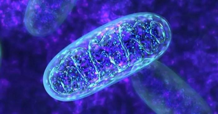 Gambar close up mitokondria yang menunjukkan peran Nrf2.