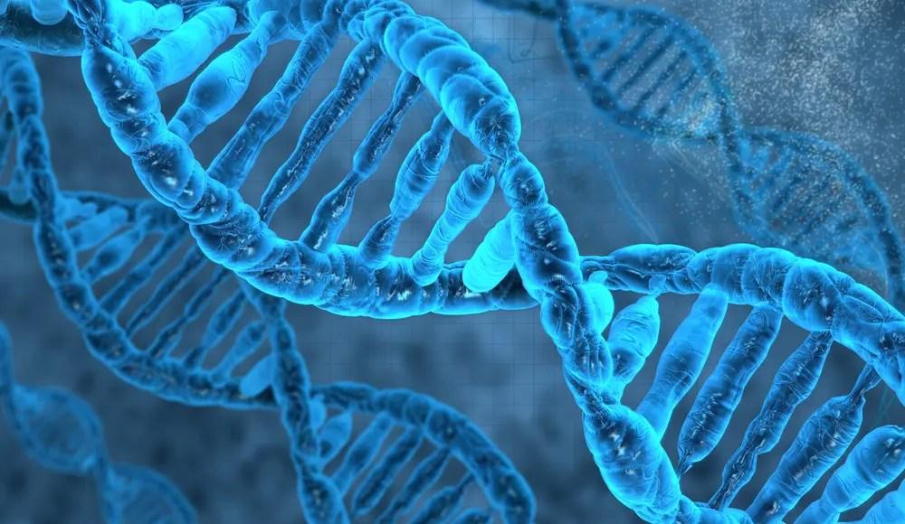 Макро Nrf2 жандануусуна көрсөткөн ДНК ийилген образы.