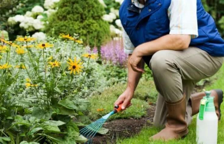 Higiene espinal jardineria el paso tx.