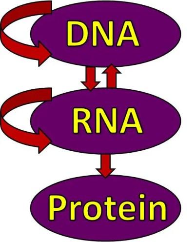 epigenetics and diatetics el paso tx.