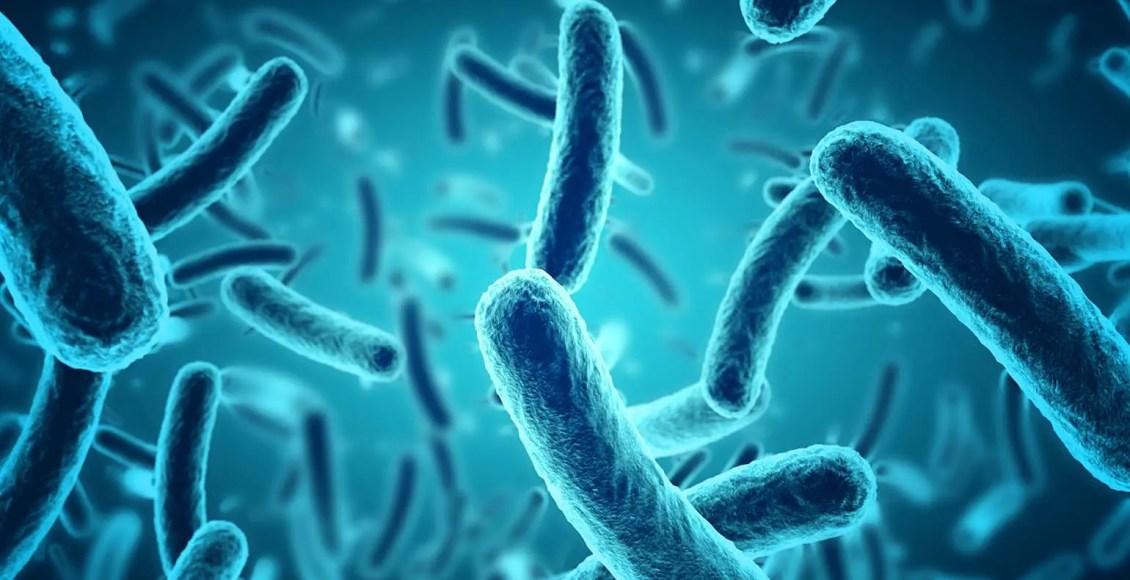 El papel del microbioma en la metilación del ADN   El Paso, TX Quiropráctico