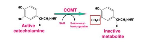 Methylation Explained Diagram   El Paso, TX Chiropractor