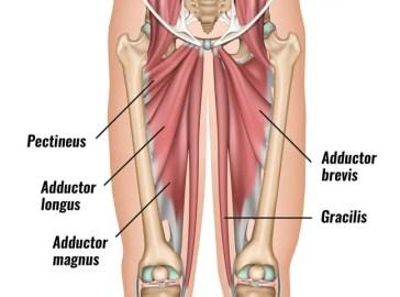 ingle-músculos-diagrama-3 | El Paso, TX Quiropráctico
