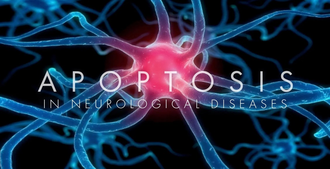 Apoptosis in Neurological Diseases | El Paso, TX Chiropractor