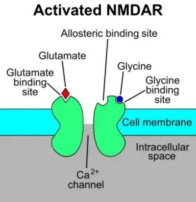 NMDA Receptors Figure 2 | El Paso, TX Chiropractor