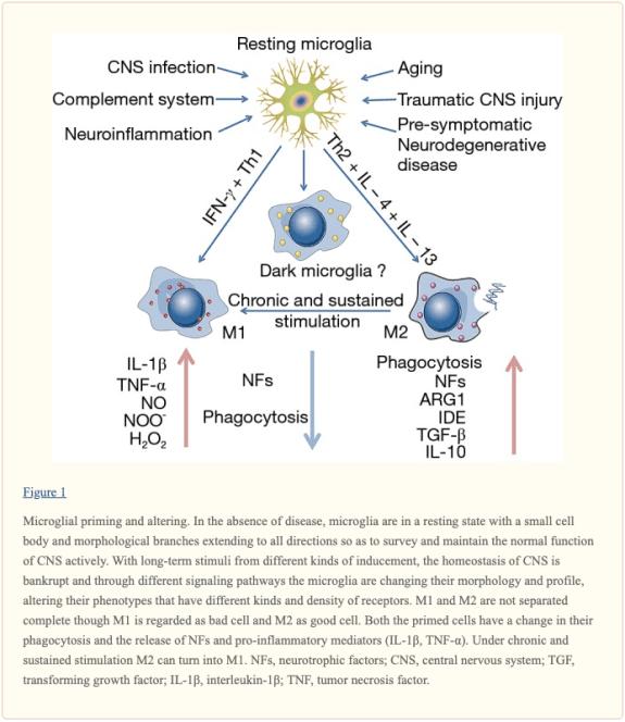 Figure 1 Microglial Priming and Altering   El Paso, TX Chiropractor