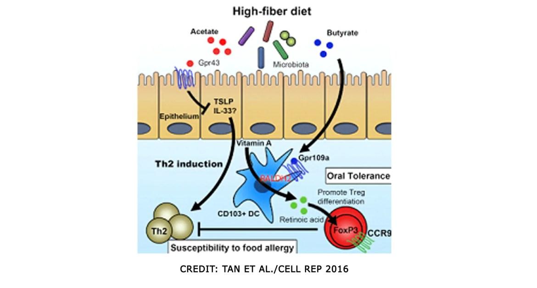 pós-dieta-fibra-ácidos-graxos-de-cadeia-curta-e-vitamina-A