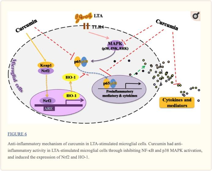 Figura 6 Mecanismo antiinflamatorio de la curcumina | El Paso, TX Quiropráctico