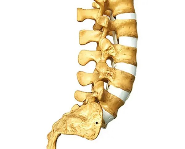 11860 Vista Del Sol, Ste. 128 The Lumbosacral Joint and Possible Cause For Sciatic Nerve Pain