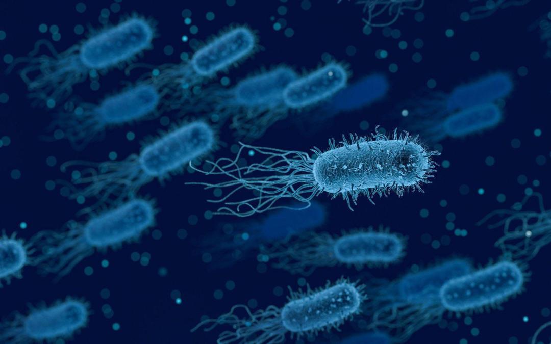 Las bacterias usan las reglas cuánticas