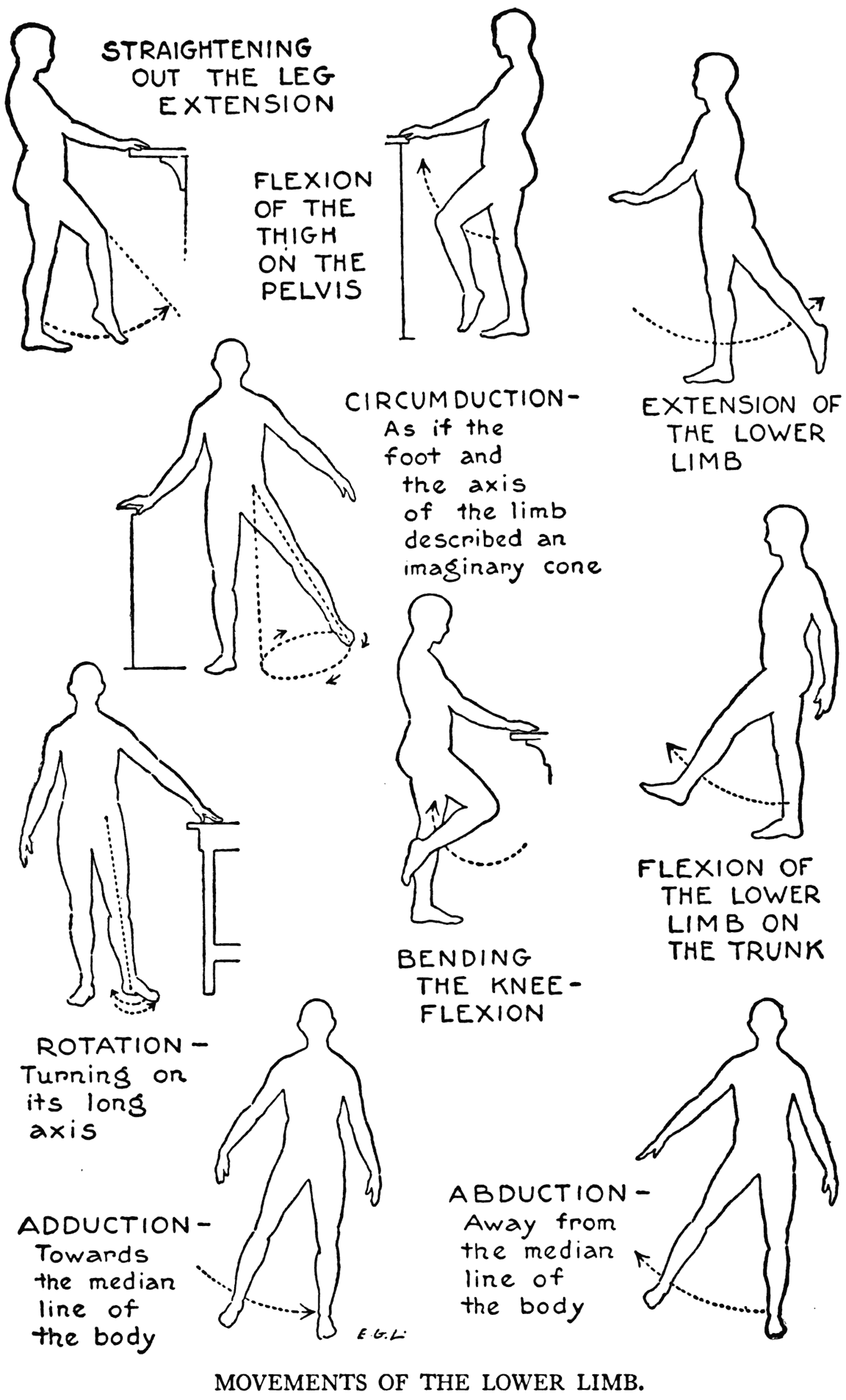 Diagram Of Hip Low Back   Wiring Diagram Database