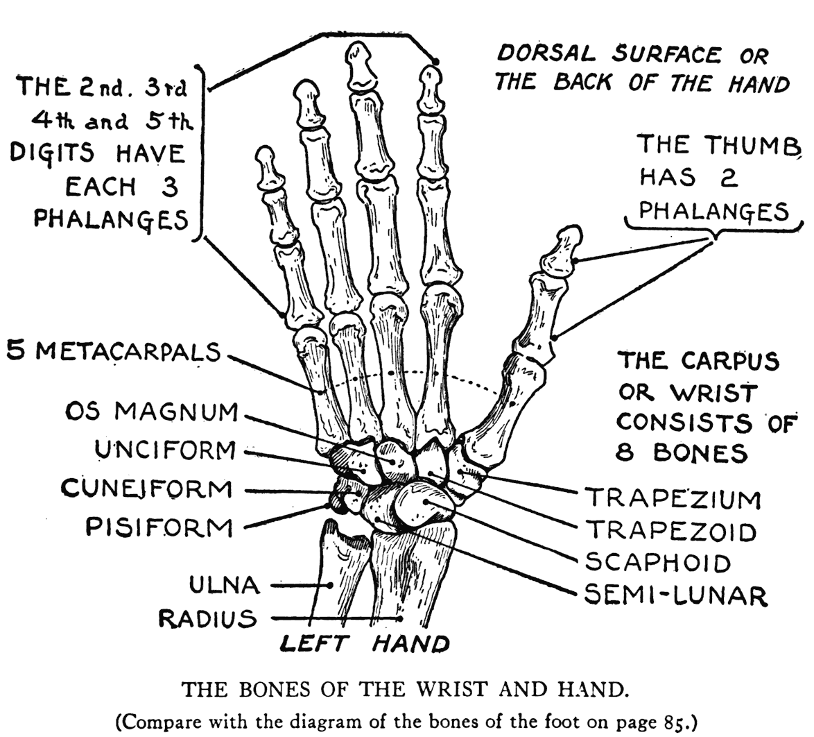 Images About The X In X Ray Amp Other Medical Fun