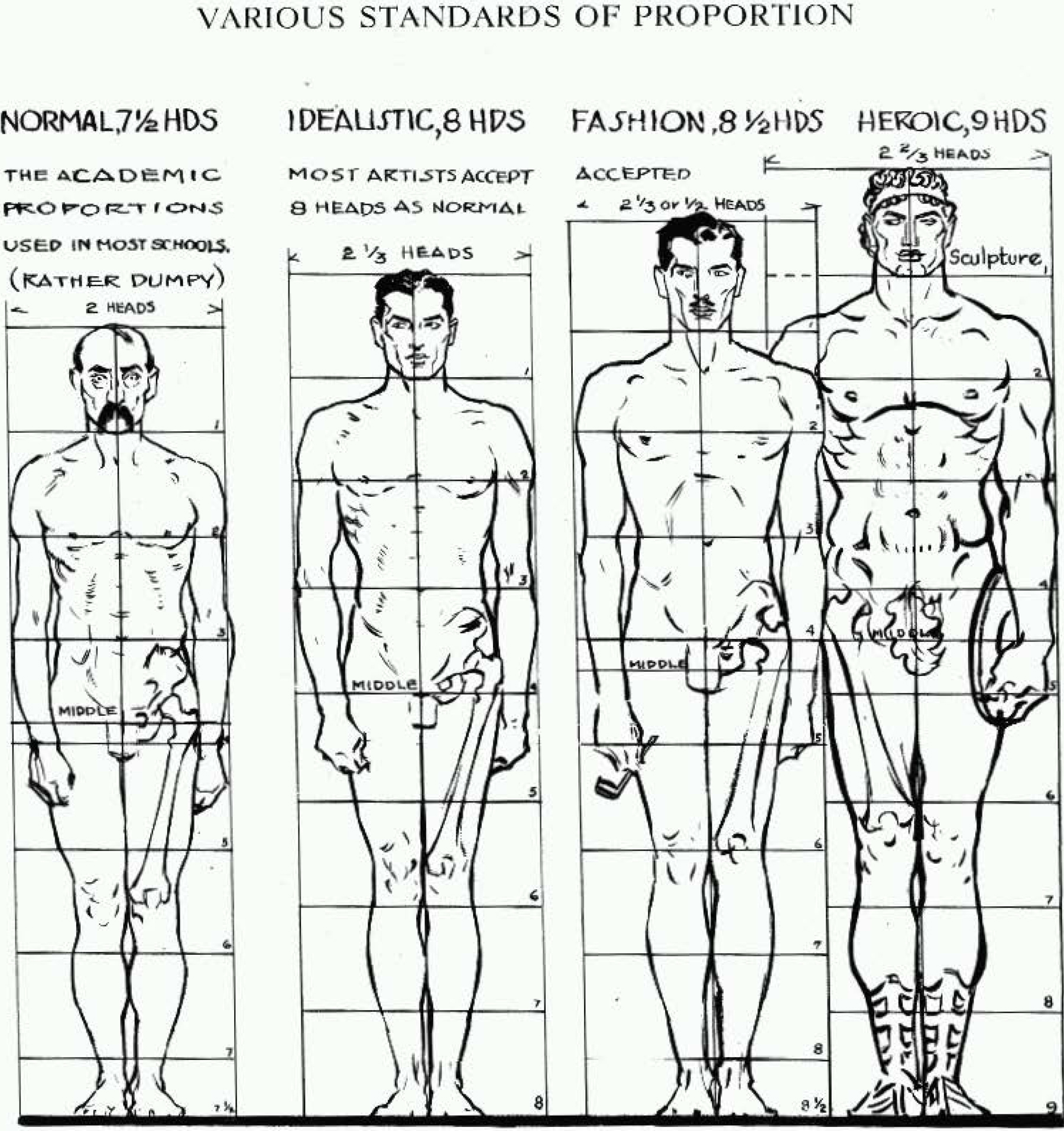 Proportions Of The Human Figure How To Draw The Human