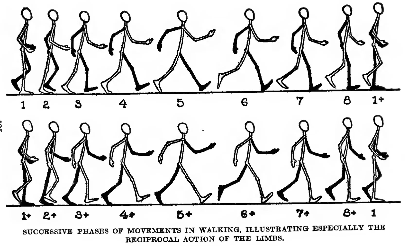 How To Draw And Animate A Person Walking Or Running