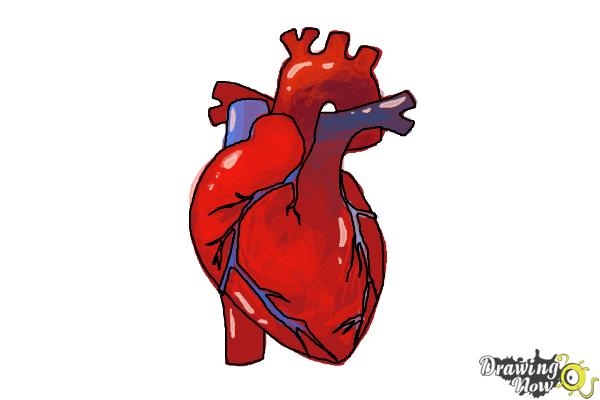 Coloring Page Heart Body