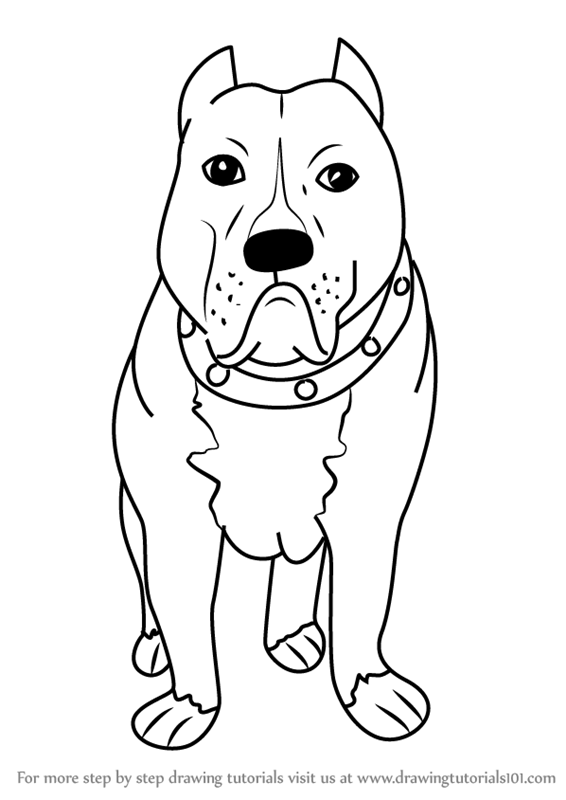 Learn How To Draw A Cartoon Pitbull Dog Cartoon Animals Step By Step Drawing Tutorials