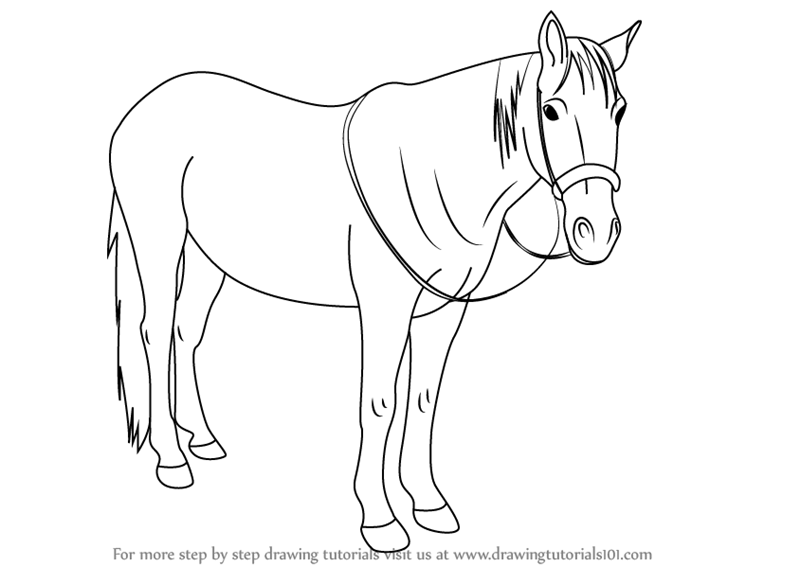 Learn How To Draw Standing Horse Horses Step By Step Drawing Tutorials
