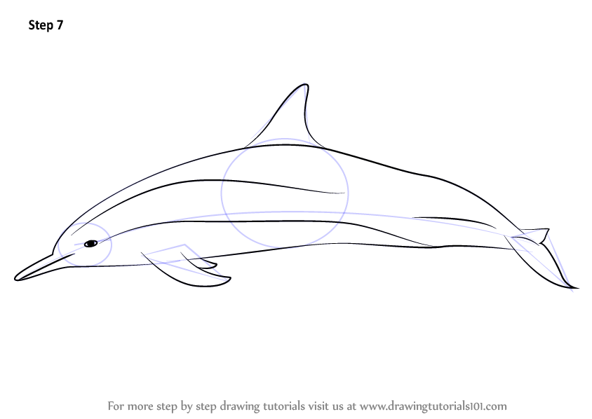 Learn How To Draw A Spinner Dolphin Marine Mammals Step