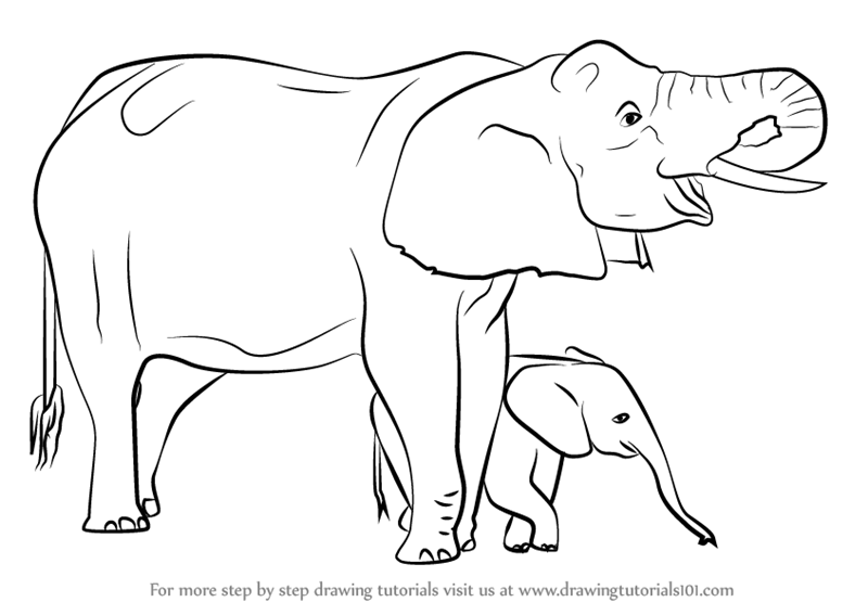 Learn How To Draw An Elephant Mother And Baby Other Animals Step By Step Drawing Tutorials