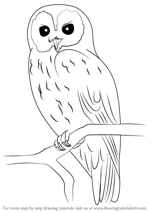 Easy Draw Cartoon Owls