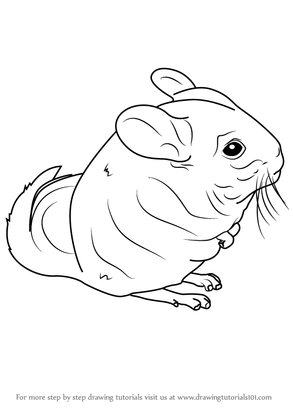 Learn How To Draw A Long Tailed Chinchilla Rodents Step