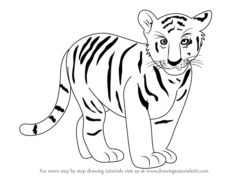 Image of: Images Learn How To Draw Tiger Cub zoo Animals Step By Step Drawing Tutorials Drawingtutorials101com Learn How To Draw Tiger Cub zoo Animals Step By Step Drawing