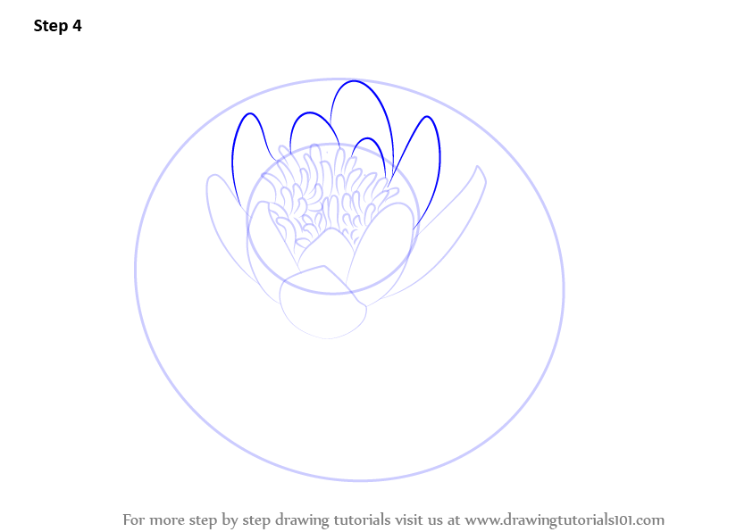 Learn How To Draw A Water Lily Lily Step By Step