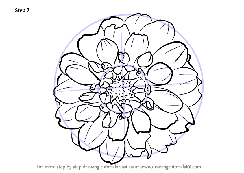 Dahlia Flower Drawing
