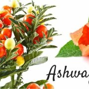 Ashwagandha (Withania Somnifera) ke benefits (fayde) in hindi