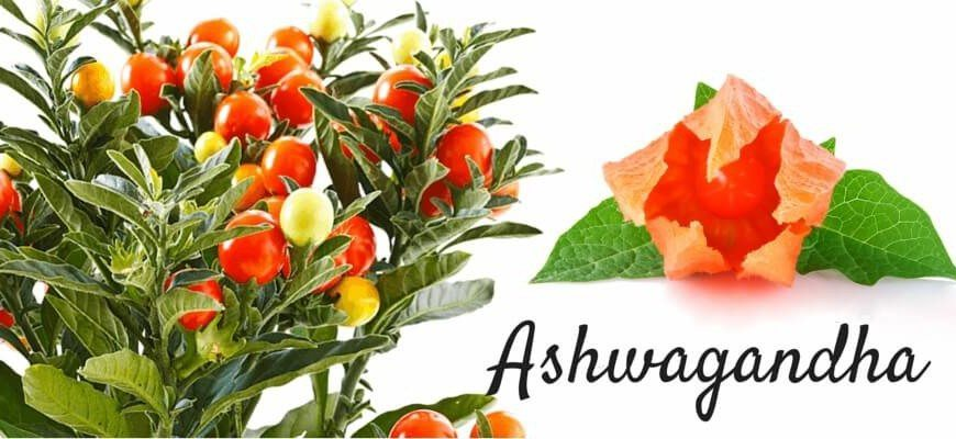 Ashwagandha Benefit in hindi