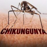 Chikungunya in Hindi: Chikunguniya Symptoms Treatment in Hindi