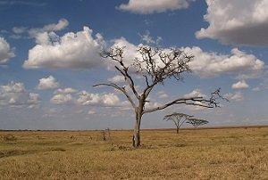 How to Get Through Spiritual Dryness
