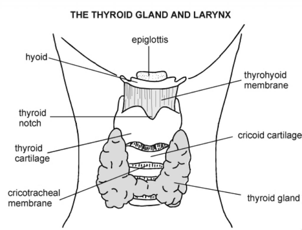 Face Anatomy Gland Diagram