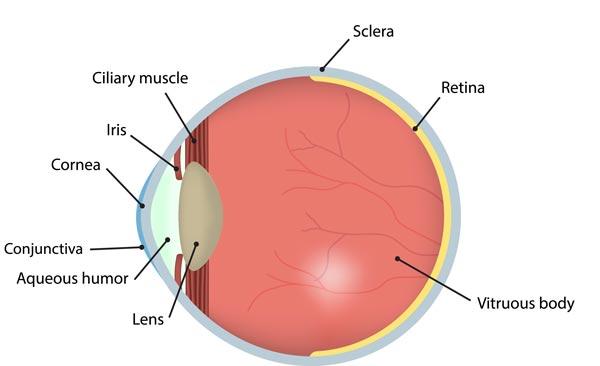 healthy-eye