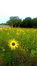 sunrise-jubilee-farm-7