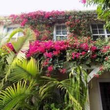 the-caribbean-court-boutique-hotel-2