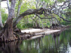 Glades County: Fisheating Creek, Palmdale, FL. (Premarital Course)